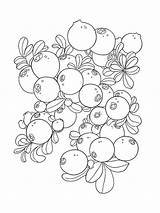 Coloring Pages Cowberry Blueberries Berries Printable Fruits Cartoon Template Colors Mycoloring Recommended sketch template