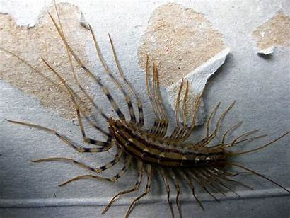 Centipede Insects Japanese Japan Legs Bugs Lots