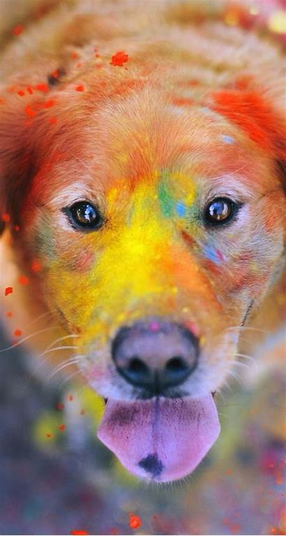 Tier Colorful Iphone Dog