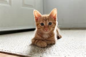 cat or cat rescue cat rescue