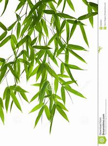 Bamboo- leaves stock photo. Image of floral, branch ...