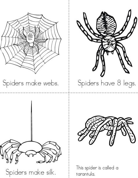 book  spiders twisty noodle