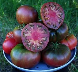Heirloom Black Krim Tomato Grown on Our Farm by CheapSeeds ...
