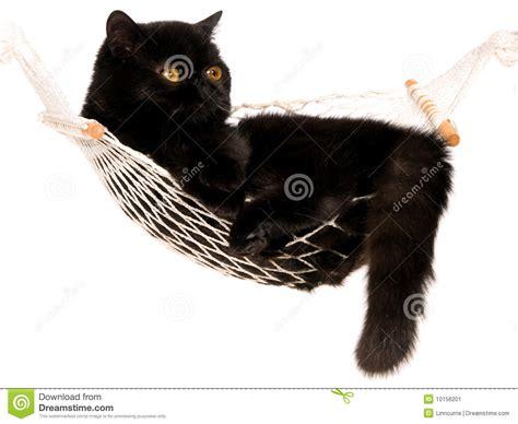 black cat lying in mini hammock stock image image 10156201