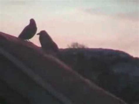 sarah mclachlan blackbird lyrics full song youtube