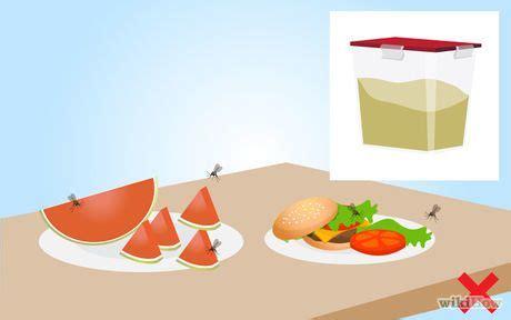 comment tuer les moucherons dans la cuisine les 25 meilleures idées de la catégorie moucherons plantes