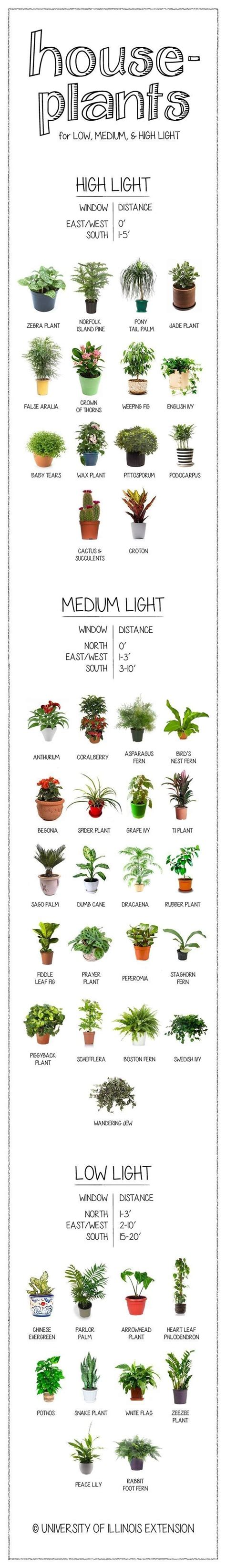 how much light for seedlings how much light does your houseplant need find out on this handy chart plants houseplant and