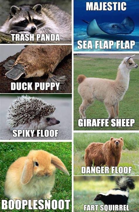 special doggo meme guy