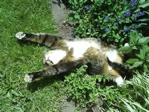 35 cats that clearly a serious catnip problem