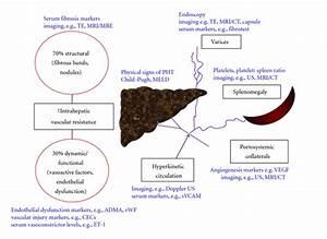 Noninvasive Evaluation of Portal Hypertension: Emerging ...