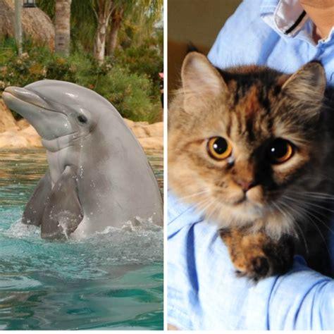 dolphins cats   similar  sharing  genes
