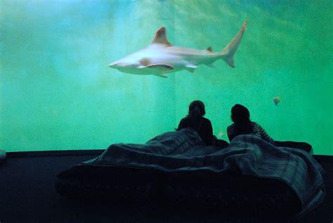 dormir au milieu des requins tourisme insolite chtinoui