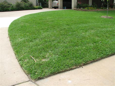 what type of grass is sod specializing in