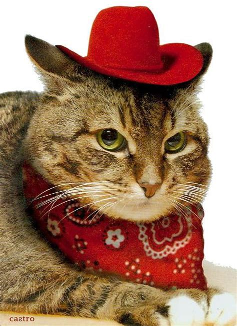 Images tagged cat cowboy hat. caterville — Howdy Partner: Cats in Cowboy Hats