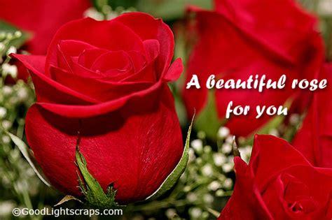 love  quotes  roses quotesgram
