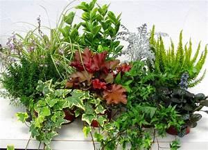 Winterharte Pflanzen Für Balkonkästen : balkonpflanzen set f r balkonk sten 100 cm lang pflanzen versand f r die besten winterharten ~ Orissabook.com Haus und Dekorationen