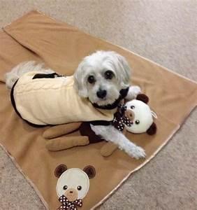 Teddy Fleece Decke : exclusive dog boutique westie hundedecke billig teddy b r decke ~ Orissabook.com Haus und Dekorationen