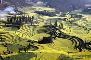 Luoping Yunnan China Fields County