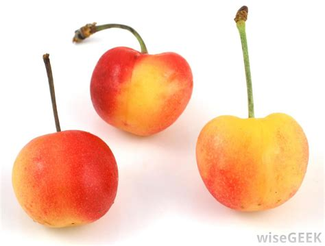 cherries types what are the different types of cherry trees with pictures