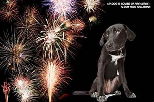 My Dog is Scared of Fireworks – Short Term Solutions