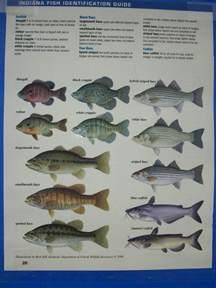 Indiana River Fish Species Identification