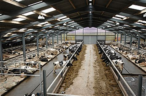 Dairy Cow Shed Design - brendan woodley october 2011