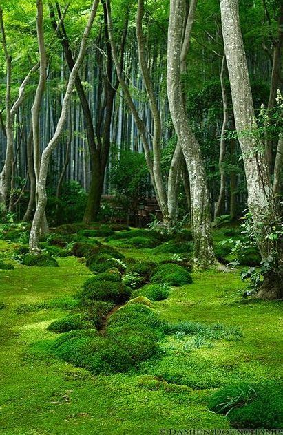 moss garden japan 4560 best images about nature wildlife on pinterest iceland in pictures and africa