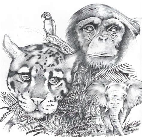 drawn jungle illustration pencil   color drawn