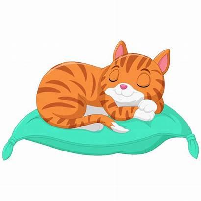 Cat Sleeping Pillow Cartoon Sleep Durmiendo Een