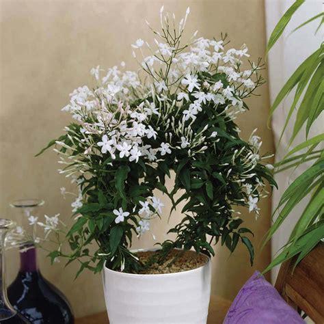 quelle plante pour une chambre 5 plantes d intérieur pour décorer la chambre à coucher et