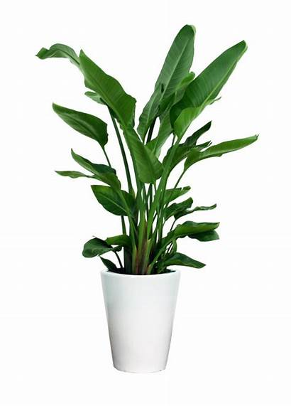 Plant Plants Indoor Transparent Potted Clipart Houseplant