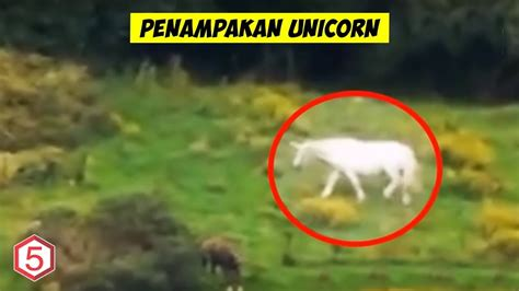 penampakan unicorn  dunia nyata  terekam kamera