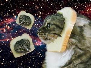 DONT TELL MY CAT Bread That Cat YouTube