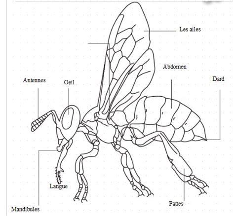schema d une le sch 233 ma d une abeille