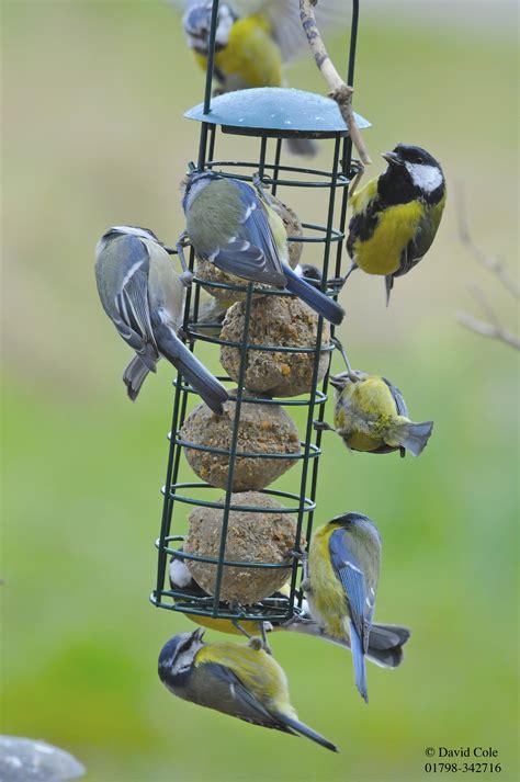 wild bird food bulk bird feed feeders for wild birds