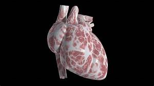 An Isolated Heart Beating  Loops Stock Footage Video