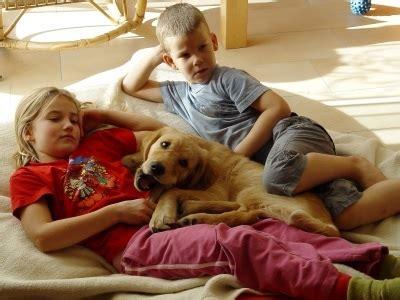 Glueckliche Haustiere Was Hunde Brauchen by Das Ideale Haustier Fuer Kinder