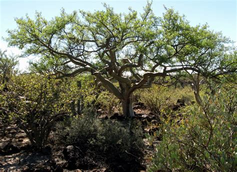 pictures of plants and trees 10 desert trees and plants grown in the driest regions quick top tens