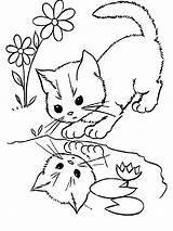 Coloring Cats Pages Animals Printable Cat Pets sketch template