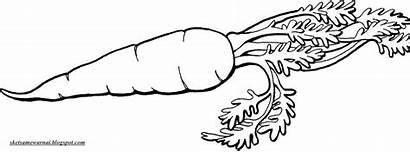Gambar Putih Hitam Wortel Mewarnai Sketsa Jamur