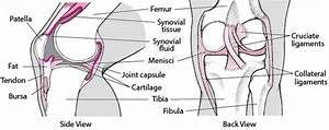 Joints - Bone  Joint  And Muscle Disorders