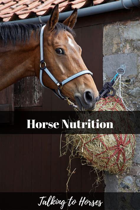 horse nutrition horses
