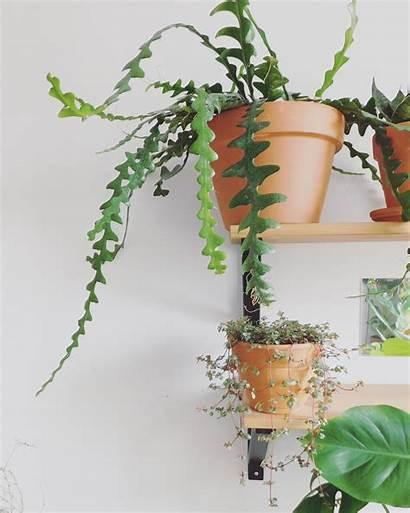Cactus Plants Grow Plant Houseplants Succulents Blogger