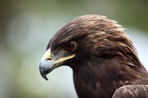 raptor bird mountain workshops 2011 birds of a feather by morgan walker