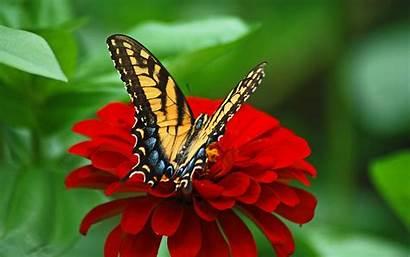 Butterflies Flowers 4k Wallpapers