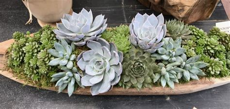 creative ways to plant succulents beautiful and creative ways to display succulent plants montana happy