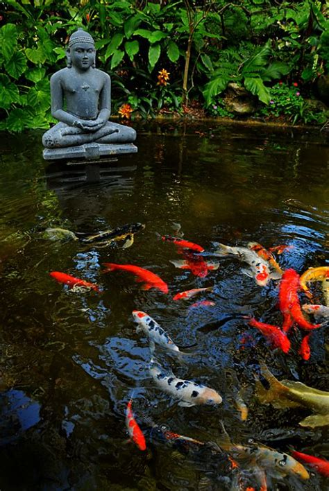 coy ponds pictures koi pond at marie selby botanical gardens go to www likegossip com to get more gossip news