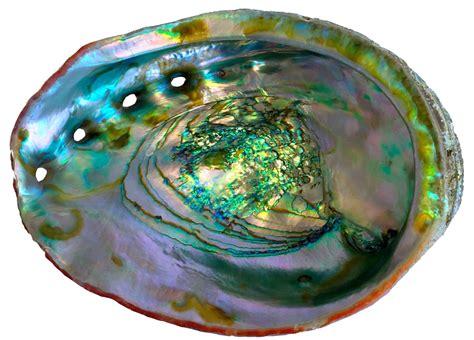 Motherofpearl's Genesis Identified In Mineral's