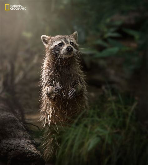 national geographic nature photographer   year