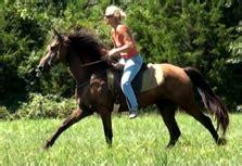 gaited mule sale missouri mule company